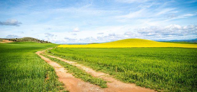 Mentaltraining – Ihr Weg zum Ziel